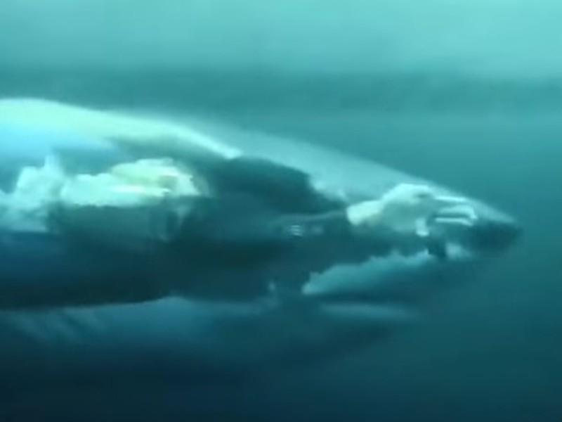 Michael Phelps v súboji so žralokom