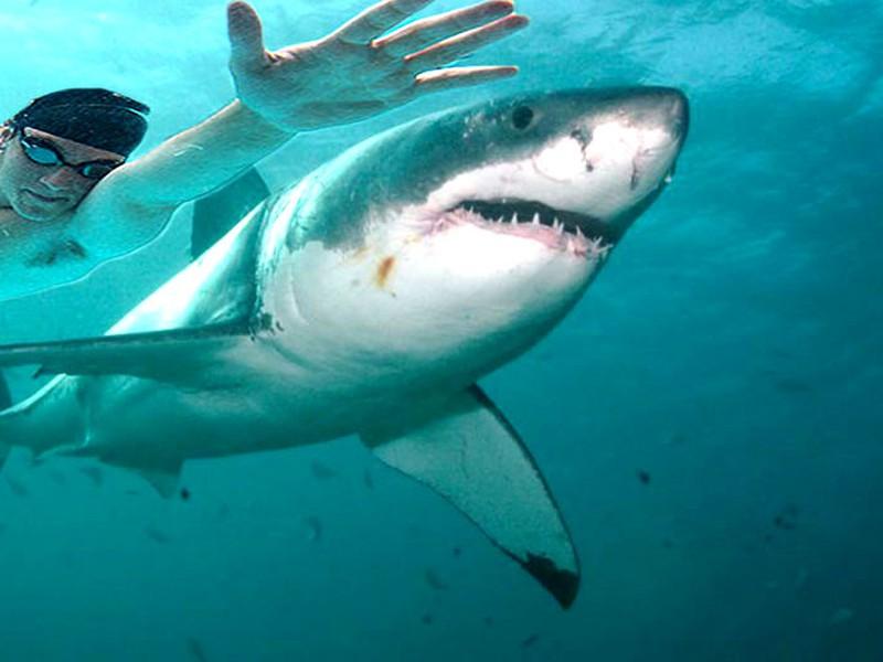 Michael Phelps si zmeral plavecké sily so žralokom